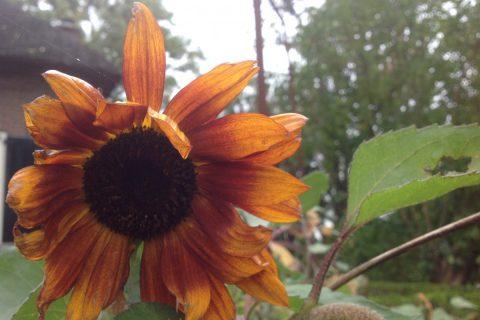 Mindfulness, compassie, meditatie en retraite